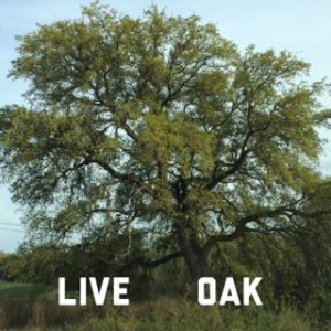 live oak in Texas