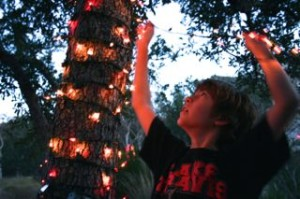 Willie decorating a live oak tree at Christmas
