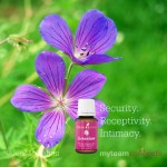 Geranium, The Antidote To Overdrive