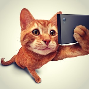 selfie cat on social media